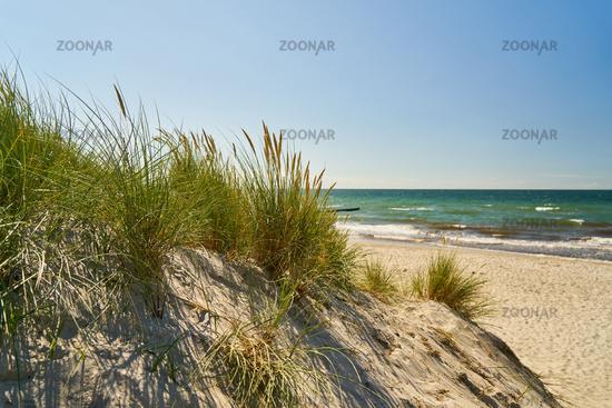 Küste mit Düne und Schilf am Sandstrand der Ostsee