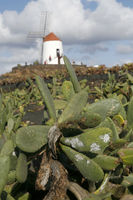 CANARY ISLANDS LANZAROTE CACTUS