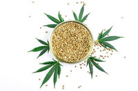 Bowl with Hemp seeds Cannabis leafs isolated on white
