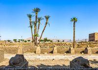 Sphinxes in Luxor