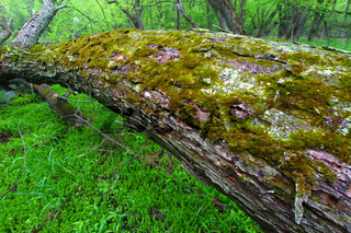 Lush Illinois Forest Understory