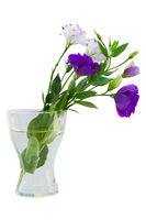Eustoma bouquet in vase