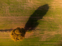 Drone looking down on single tree in cropland casting long shadow with vibrant fall colors in October on sunny day