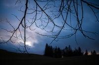Twilight Rural Forest Scene