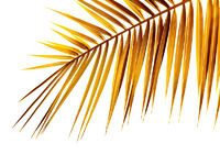 Palmenblatt im Herbst