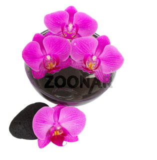 orchid and zen stones