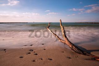 Baumstamm an der Küste der Ostsee bei Nienhagen