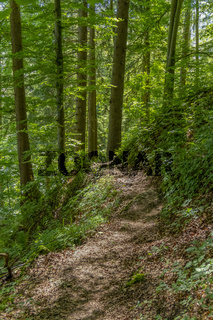 Forest track in Bavaria