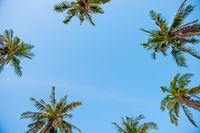 Palm top trees on blue sky