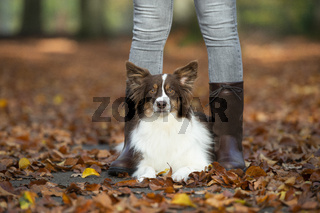 Pretty dog lying down between the legs of its owner outdoors in a autumn forest