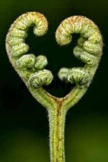 felce in love