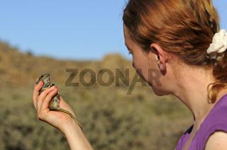 Zoologin betrachtet eine Afrikanischen Striemen-Grasmaus