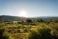 Green vegetation at Kampor on the island of Rab Croatia at sunrise