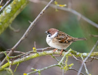 Sparrow sitting on the branch of a tree
