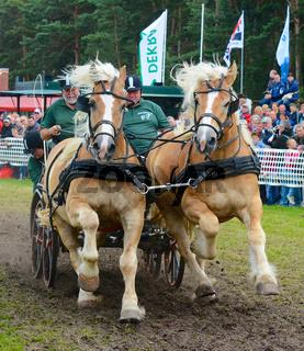 Kaltblüter als die 'Titanen des Rennens' im brandenburgischen Brück