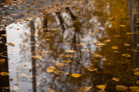 Autumn leaves on water background in puddle.
