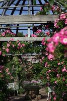 Strauchrosen Rosarium Rosenhöhe Darmstadt
