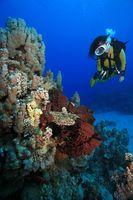 Taucherin mit Korallenriff, Scuba diver and coral reef