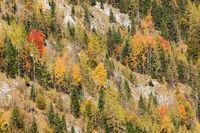 Berghang am Königssee in Bayern mit Bäumen in Herbstfärbung