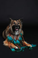 Wolfspitz with feather necklace