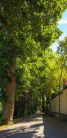 Allee mit hohen Bäumen im Doblhoffpark