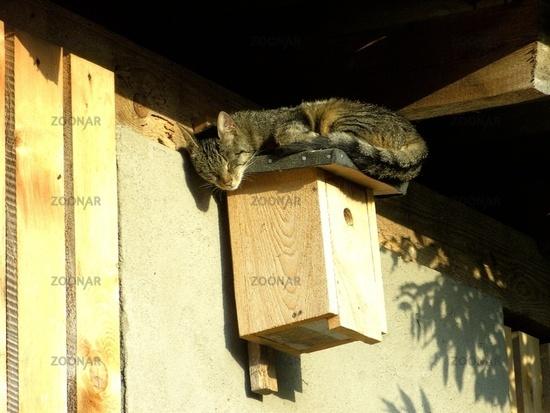 Katze schlaeft auf Vogelhaus