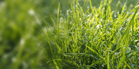 Grass or meadow panoramic background, natural header or banner