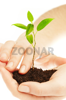 Human hands and young plant