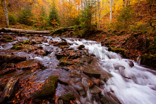 The small mountain stream in the autumn forest