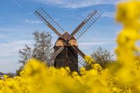 Windmühle Sargstedt im Huy