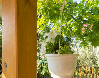 A white pot of planters with white petunia hangs on the outdoor veranda against the background of trees on a sunny summer day