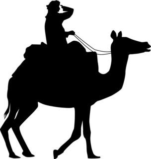 Kamelreiter - Beduine