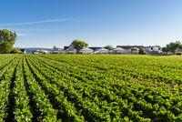 Gemüsefeld und Gewächshäuser, Insel Reichenau, Niederzell, Baden-Württemberg, Deutschland