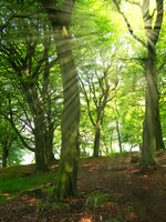 bright morning sunlight with rays shining through green springtime forest trees