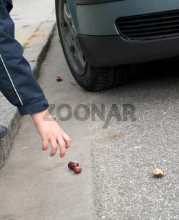 Kastaniensammeln - Gefahr in der Stadt