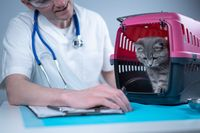 Cat in pet carrier on examination table of veterinarian clinic with pet doctor. Male veterinarian in white medical suit making notes at examination table and have fun with Scottish Straight kitten