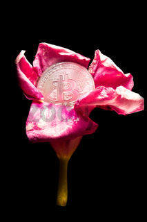 The bitcoin cryptocurrency has blossomed