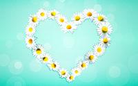 Heart shape made from white chamomile daisy flowers. Alternative medicine.
