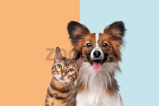 portrait of a cat and dog looking at camera
