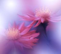 Beautiful macro shot of magic flowers.Border art design.Nature Background.Amazing Spring Flowers.