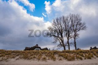 Haus und Bäume an der Küste der Ostsee in Ahrenshoop auf dem Fischland-Darß