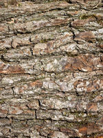 Detailaufnahme einer Baumrinde - Textur