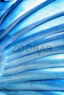 bird wing feather