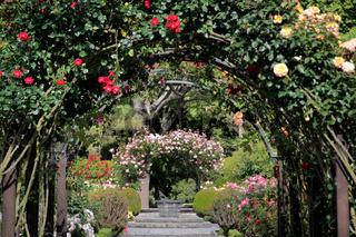 Rose garden in the Botanic Gardens