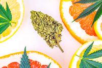 Cannabis terpenes concept with Marijuana flower bud lemons grapefruit and leafs
