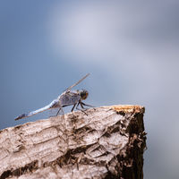 Dragonfly on a wooden post on a lake