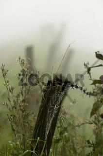 Spinnennetz im Weidezaun