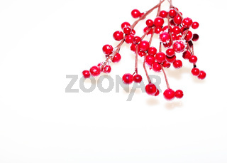 Red berrys