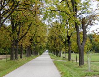 Allee mit Kastanienbäumen im Herbst