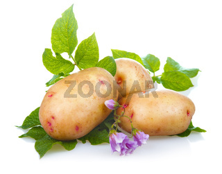 Heap of ripe potatoes vegetable with green leaves isolated